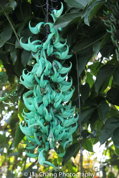 Jade Vine in Seafoam. Photo by Lia Chang