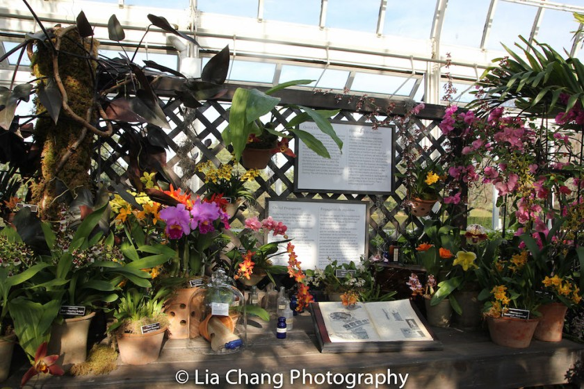 Propagation display of curiousities The Orchid Show: Orchidelirium. Photo by Lia Chang