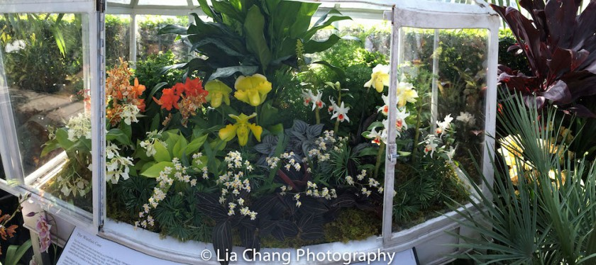 Wardian Case display The Orchid Show: Orchidelirium. Photo by Lia Chang