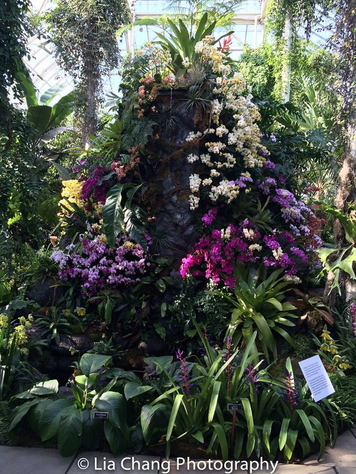 Orchid Mountain and Waterfall Display The Orchid Show: Orchidelirium. Photo by Lia Chang
